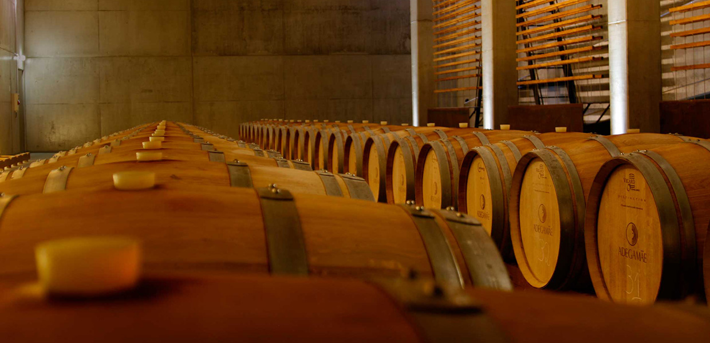 Adega Provas Vinhos Rotas do Oeste